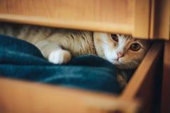 Den unga kattungen st?ngde sig i en ask och spelade arkivfoton