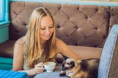 Den unga kvinnan dricker kaffe och slår katten Arkivfoto