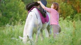 Den unga kvinnan fixar sadeln på hästen i sommarfält arkivfilmer