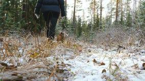 Den unga kvinnan går i skogen med en airedaleterrierTerrier hund stock video