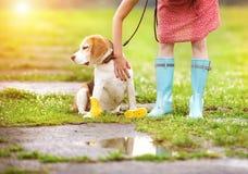 Den unga kvinnan i wellies går hennes hund Fotografering för Bildbyråer