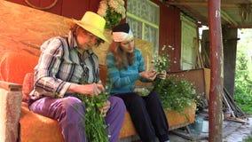 Den unga kvinnan och den växt- kamomillen för gammal hög hopsamling blommar stock video