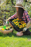Den unga kvinnan planterar blommor i en trädgårds- vas Arkivfoto