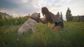 Den unga kvinnan slår hundframsidan, ser den och ler, i blommande fält i sommarafton lager videofilmer