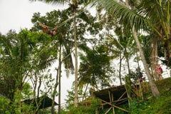 Den unga kvinnan som svänger i djungel under risen, terrasserade fält, Tegallalang, Ubud, Bali, Indonesien royaltyfri foto
