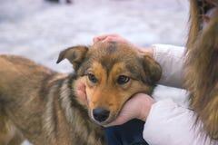 den unga kvinnan tröstar den upprivna hunden per tyst ögonblick av överenskommelse Arkivbilder