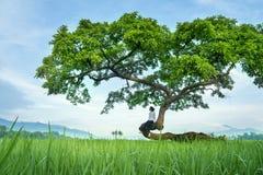 Den unga kvinnan tycker om risfältsikt på ett träd royaltyfri fotografi