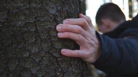 Den unga manliga handen som slår ett skäll av, sörjer med solljus på bakgrund Oigenkännlig man som trycker på en stam av trädet i arkivfilmer