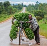 Den unga mannen är lycklig med cykeln på vägen per stort anknyta av bananer som ska säljas på marknaden royaltyfria bilder