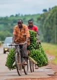 Den unga mannen är lycklig med cykeln på vägen per stort anknyta av bananer som ska säljas på marknaden arkivfoto