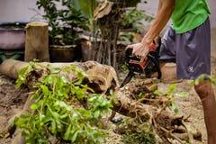 Den unga mannen använder den elektriska sågen för att klippa träd royaltyfria bilder