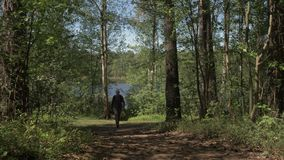 Den unga mannen går till kameran från kusten av en skogsjö Turism p? skogsj?ar 4K lager videofilmer