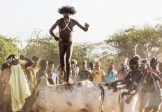 Den unga mannen hoppar av tjurarna Turmi Omo dal, Etiopien Arkivfoton