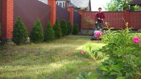 Den unga mannen mejar gräset med en gräsklippare, längs ett högt staket, nära blommorna arkivfilmer