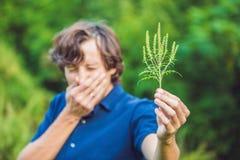 Den unga mannen nyser på grund av en allergi till korsörten arkivfoto
