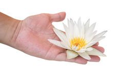 Den unga mannen som rymmer vit lotusblomma i hans, gömma i handflatan med den snabba banan Royaltyfri Foto