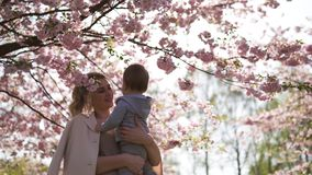 Den unga modermamman som rymmer hennes litet, behandla som ett barn sonpojkebarnet under att blomstra SAKURA Cherry tr?d med fall stock video