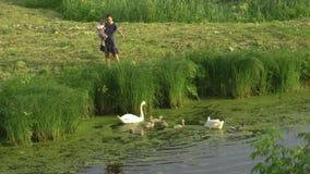 Den unga modern med henne behandla som ett barn den matande svanen för flickadottern, och små ankungar på en gräsplan parkerar da arkivfilmer