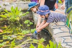 Den unga pojken som matar den Koi fisken med, mjölkar flaskan Royaltyfria Foton