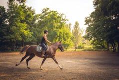 Den unga ryttaren och hästen utbildar för en konkurrens Ryttare på en häst Arkivbild