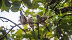 Den unga sebran dök fågeln som sätta sig på trädet arkivbilder