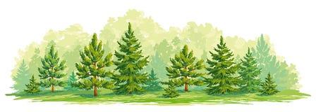Den unga skogen av sörjer och diagrammet för vektor för granträd vektor illustrationer