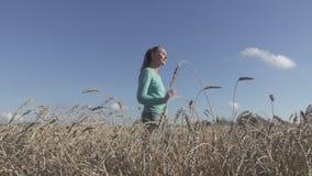 Den unga spensliga kvinnan med ett långt ganska hår i en blå tröja och jeans går över fältet av moget vete till sommar stock video