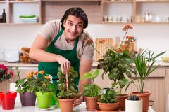 Den unga stiliga mannen som hemma odlar blommor royaltyfria bilder