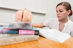 Den unga studenten g?r studier med b?cker och en hj?rnmodell fotografering för bildbyråer
