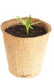 Den unga växten växer från en fertil jord isoleras Royaltyfria Foton