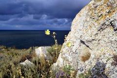 Den unika naturen av havet av Azov Royaltyfri Foto