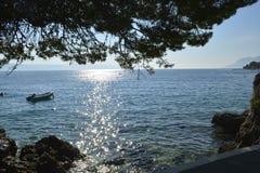 Den unika naturen i Kroatien på Adriatiskt havet Arkivfoto