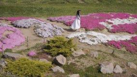 Den ursnygga brunetten i den vita klänningen går bland rosa blomsterrabatter arkivfilmer