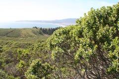 Den ursnygga havstranden förbiser av den Stinson stranden i Marin County California High Quality fotografering för bildbyråer
