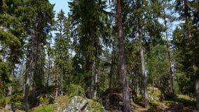 Den ursnygga sikten av den steniga kullen f?r skogen med gr?splan s?rjer tr?d p? bakgrund f?r bl? himmel lager videofilmer