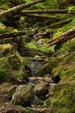 Den urtids- skogen med The Creek - HDR Royaltyfri Foto