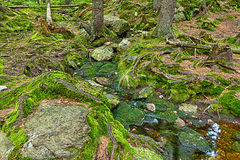 Den urtids- skogen med The Creek - HDR Arkivbilder