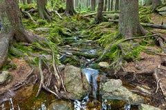 Den urtids- skogen med The Creek - HDR Royaltyfri Fotografi