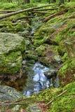 Den urtids- skogen med The Creek - HDR Arkivfoto
