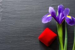 Den utsökta purpurfärgade irisblomman på naturligt stenar bakgrund, kopplingsbegrepp royaltyfri fotografi