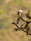 den vända mot away oisolerade fågeln går Royaltyfri Bild