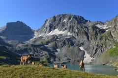 Den västra Caucasian turen Royaltyfria Bilder