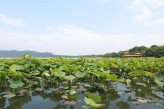 Den västra lakehangzhouen, porslin arkivbilder