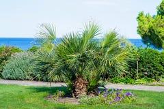 Den växande lilla palmträdet i sommardagen Arkivbild