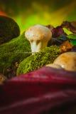 Den våta champinjonpuffballen växer på grön mossa Royaltyfri Bild