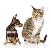Den valphunden och katten Fotografering för Bildbyråer