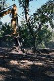 Den van vid grävskopan gräver upp trädet arkivbild
