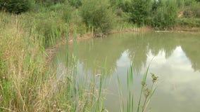 Den varma dagen på sjön, reflekteras himlen i vattnet arkivfilmer