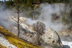 den varma kolossala nationalparken springs yellowstone Fotografering för Bildbyråer