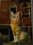 Den venezian katten - veneziana di gatto Arkivfoto